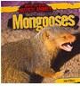 John Mara, O&amp&#x3b;apos, John O'Mara - Mongooses